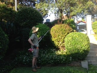 Amico garden specialists Sydney at work