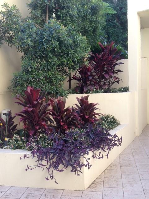 335 garden local gardeners eastern suburbs sydney 1
