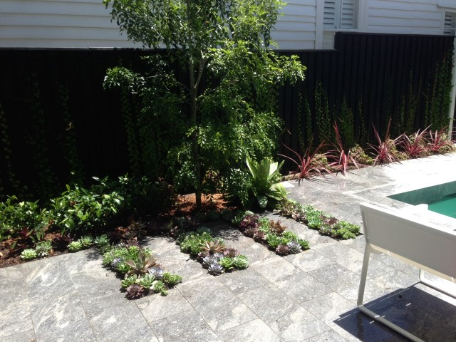 Cliff st small garden maintenance services sydney