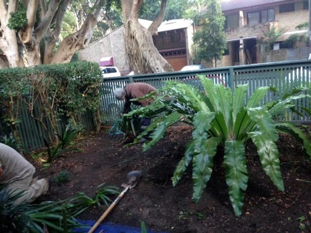 garden service eastern suburbs sydney