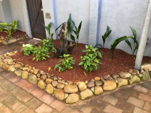 home gardening services sydney eastern suburbs