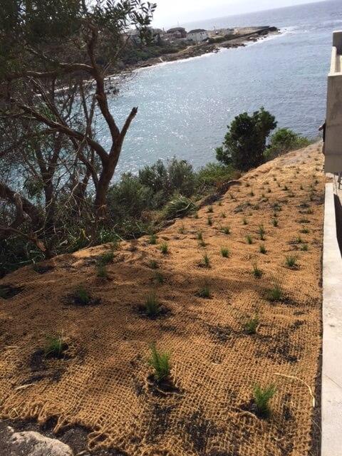 landscape- maintenance sydney