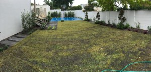 mowing and gardening services sydney