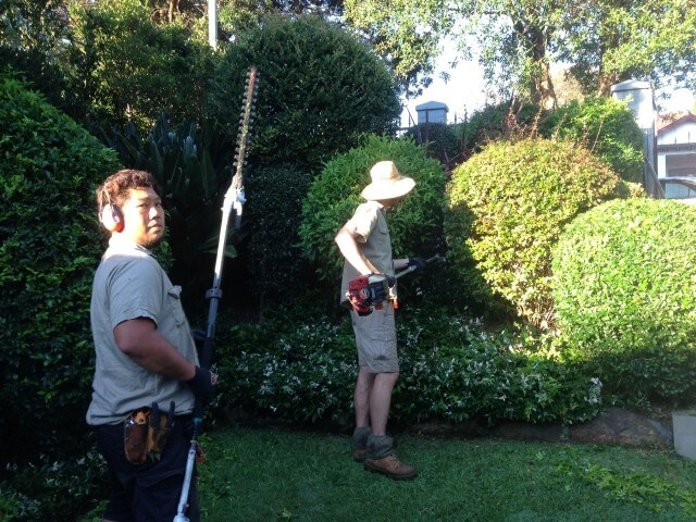 our local gardeners and landscapers in Sydney at work