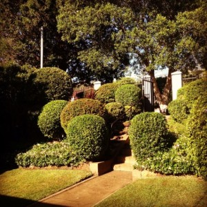 outdoor landscaping gardening sydney