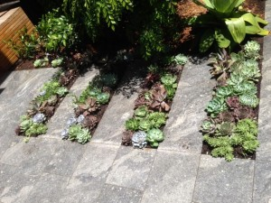 small garden maintenance