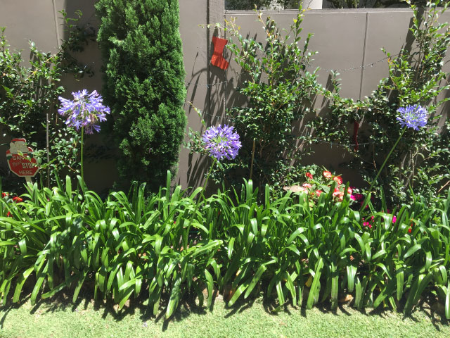 garden irrigation eastern suburbs sydney