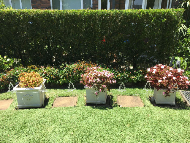 landscapers bondi junction eastern suburbs