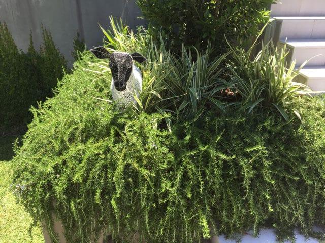 landscaping eastern suburbs bondi sydney