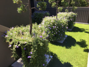 lawn and garden maintenance Sydney