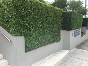 tree trimming removal eastern suburbs sydney