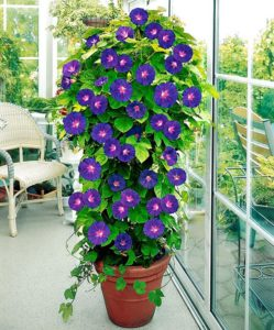 Trellis Plants