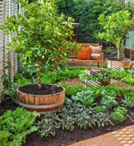 Delicious Edible Garden