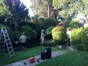 gardeners Coogee team
