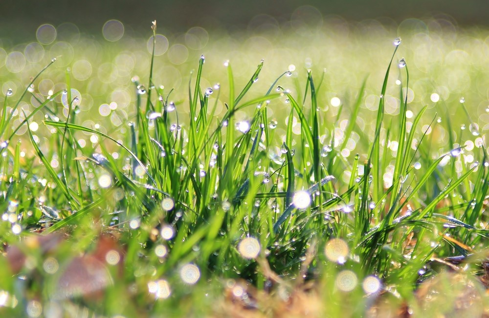 lawn garden fertilising services