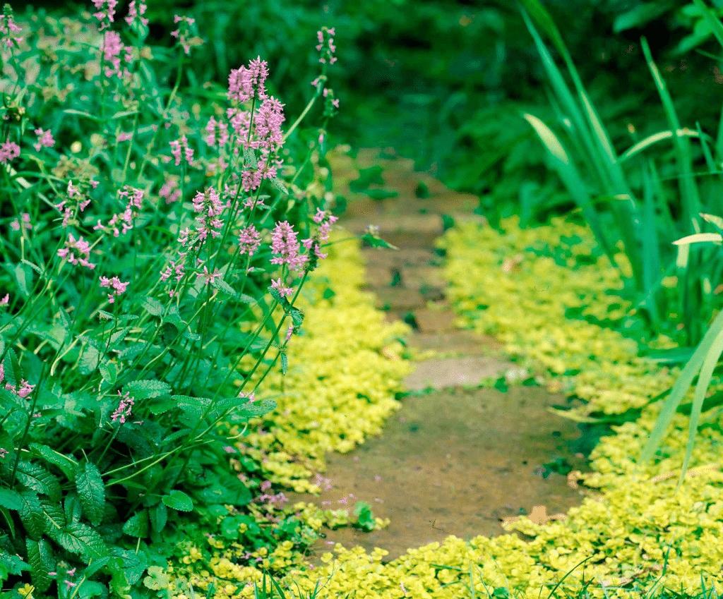 gardener eastern suburbs
