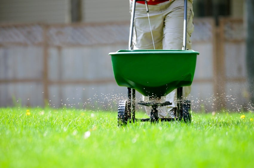 Fertilise Lawns
