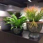 Surry hills office outdoor pots sydney