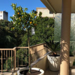 garden maintenance services for apartment