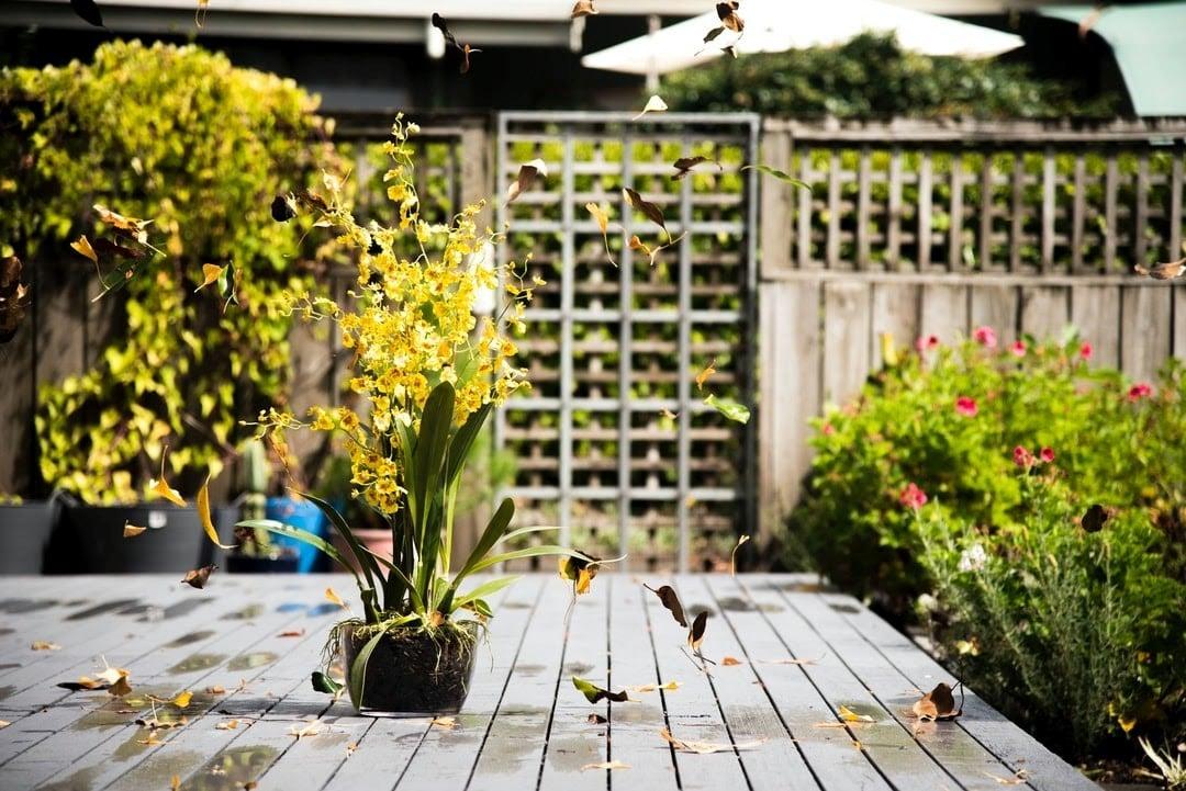 garden design sydney