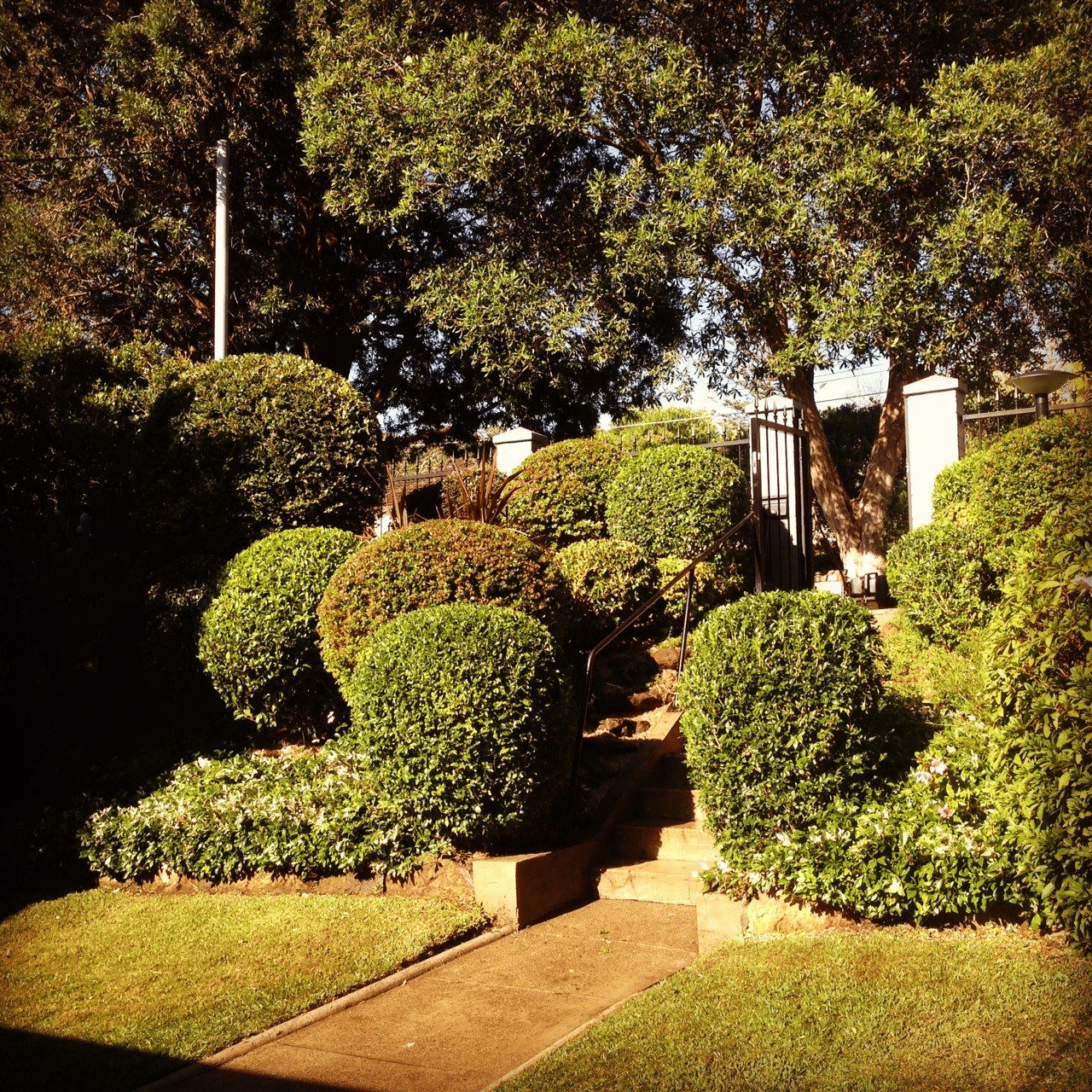 tree cutting services sydney