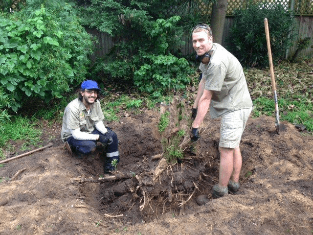 tree stump removal sydney
