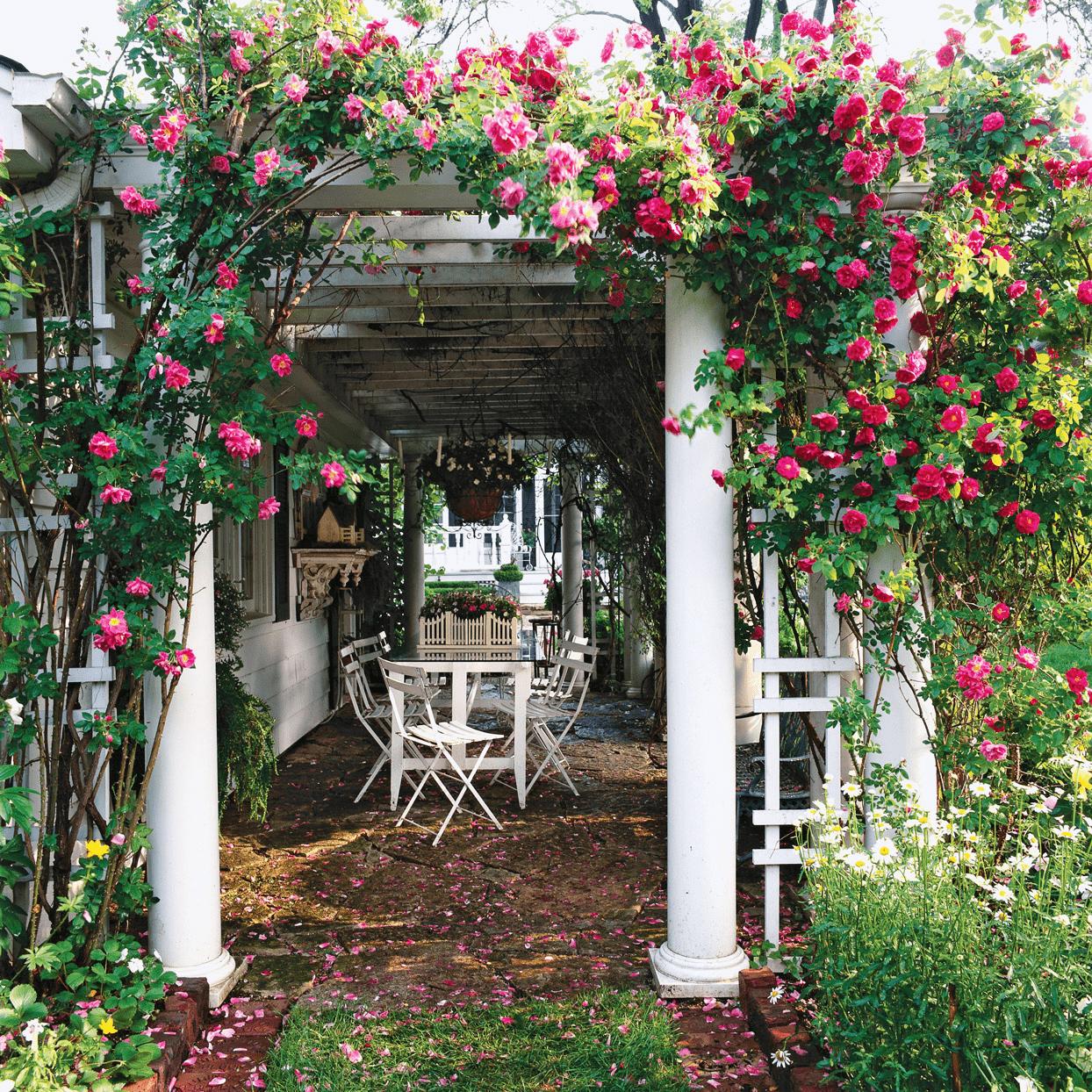 flower covered pergola garden design