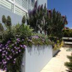 Nimboidia home gardening services sydney