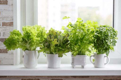 edible houseplants