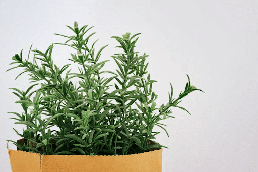 edible plants to grow indoors