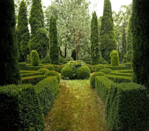 when to prune hedges Australia