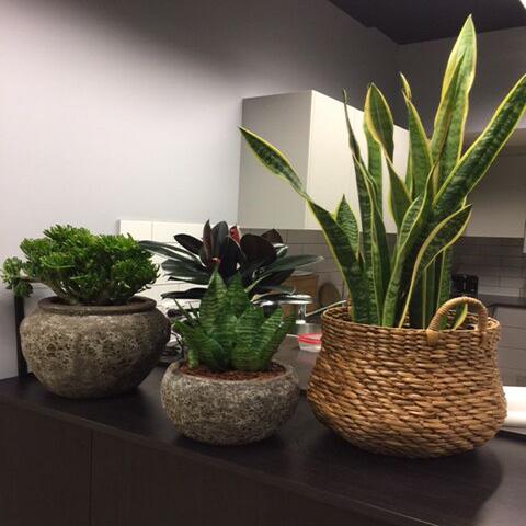 Decorative Pots U0026 Shop