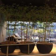 Surry hills office large pots for plants