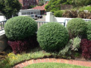 Tree removal eastern suburbs